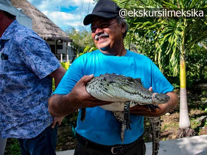 Едят ли крокодилов